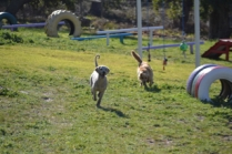 Banksia Park Puppies Luna - 5 of 48