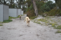 banksia-park-puppies-luna-8-of-11