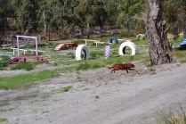Banksia Park Puppies Poko - 1 of 19