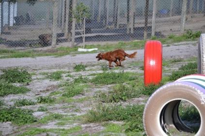 Banksia Park Puppies Poko - 10 of 19