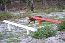 Banksia Park Puppies Poko - 11 of 19