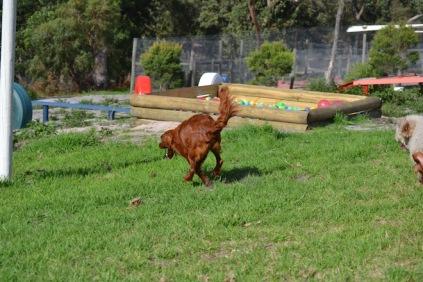 Banksia Park Puppies Poko - 14 of 19