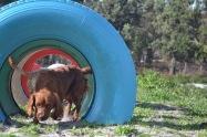 Banksia Park Puppies Poko - 19 of 19
