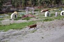 Banksia Park Puppies Poko - 2 of 19