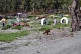 Banksia Park Puppies Poko - 3 of 19