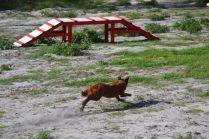Banksia Park Puppies Poko - 6 of 19