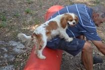 Banksia Park Puppies Tia