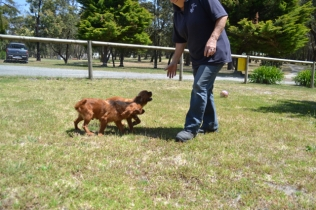 shazzoom-banksia-park-puppies-12-of-22