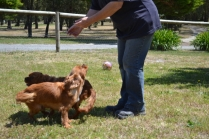 shazzoom-banksia-park-puppies-14-of-22