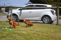 shazzoom-banksia-park-puppies-7-of-22