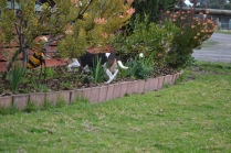 Banksia Park Puppies Sweety
