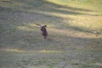 Banksia Park Puppies Wendy