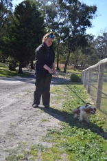 Banksia Park Puppies Startlet