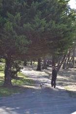 Banksia Park Puppies Startlet