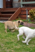Banksia Park Puppies Monty - 10618