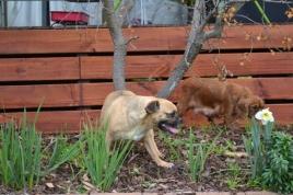 Banksia Park Puppies Monty - 10634