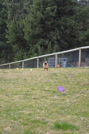 Banksia Park Puppies Monty - 10639