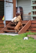 Banksia Park Puppies Monty April Shez - 11662