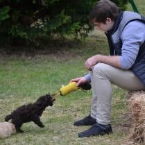 Banksia Park Puppies party