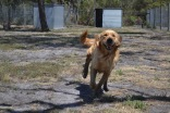 Banksia Park Puppies - 39 of 42