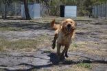 Banksia Park Puppies - 39 of 42