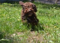 Banksia Park Puppies Flash