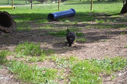 Banksia Park Puppies Mati