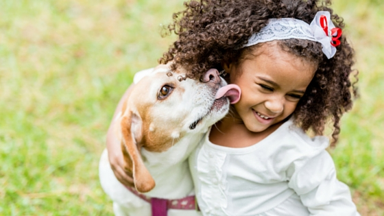 Why does your dog lick you-