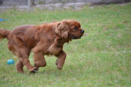 Banksia Park Puppies Neerim