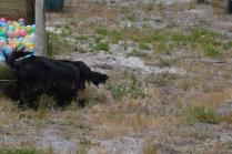 banksia-park-puppies-jacinta-wooster-ella-swoosh-14-of-51