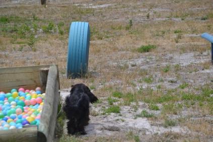 banksia-park-puppies-jacinta-wooster-ella-swoosh-15-of-51