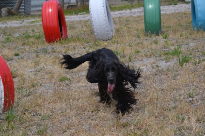 banksia-park-puppies-jacinta-wooster-ella-swoosh-28-of-51