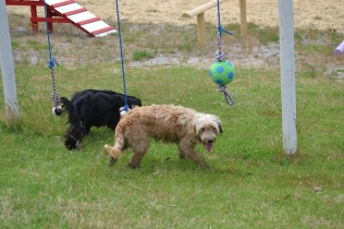 banksia-park-puppies-jacinta-wooster-ella-swoosh-41-of-51