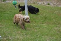 banksia-park-puppies-jacinta-wooster-ella-swoosh-43-of-51
