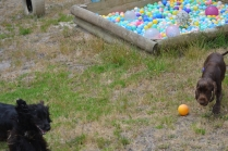 banksia-park-puppies-jacinta-wooster-ella-swoosh-46-of-51