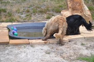 banksia-park-puppies-jacinta-wooster-ella-swoosh-49-of-51