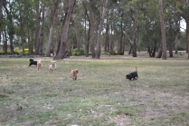 Banksia Park Puppies Sherry, Sharon, Arial, Swoosh - 5