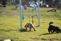 Banksia Park Puppies Swoosh - 11 of 37
