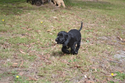 Banksia Park Puppies Swoosh 11