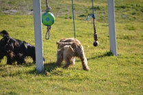 Banksia Park Puppies Swoosh - 12 of 37
