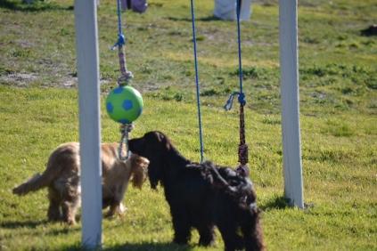 Banksia Park Puppies Swoosh - 13 of 37