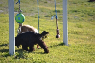 Banksia Park Puppies Swoosh - 14 of 37