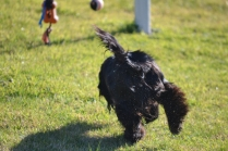 Banksia Park Puppies Swoosh - 17 of 37