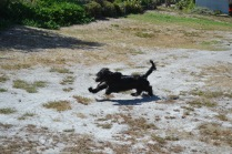 Banksia Park Puppies Swoosh - 2 of 8