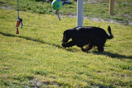 Banksia Park Puppies Swoosh - 24 of 37