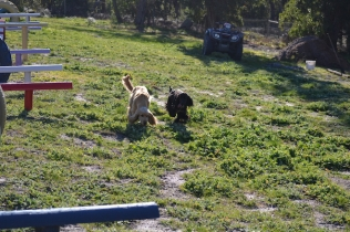 Banksia Park Puppies Swoosh - 3 of 37