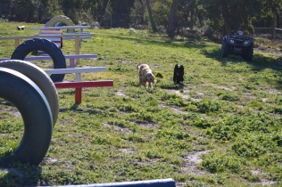 Banksia Park Puppies Swoosh - 4 of 37