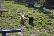 Banksia Park Puppies Swoosh - 6 of 37