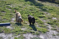 Banksia Park Puppies Swoosh - 7 of 37