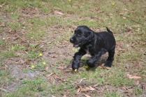 Banksia Park Puppies Swoosh 9